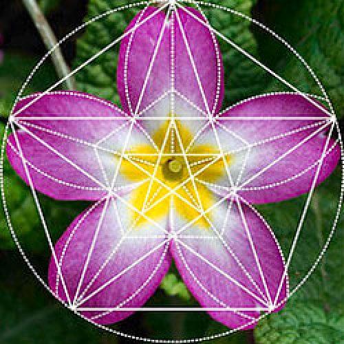 Sofia-knakal-terapia-floral-botanica